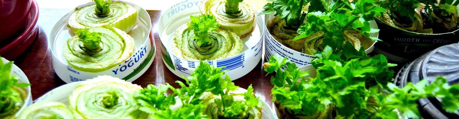 Groenten Opnieuw Kweken Groentehelden